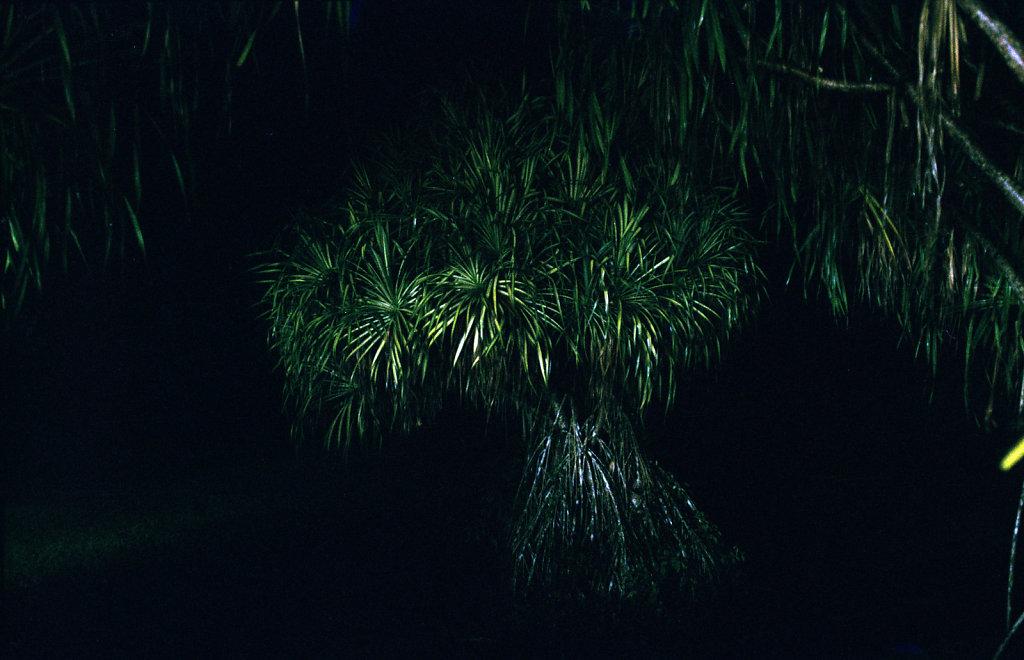mon-ouest-kaz-island-tree.jpg